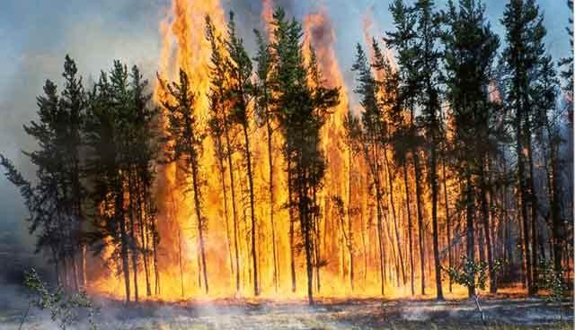 Un feu de forêt ravage  20 hectares à Tétouan