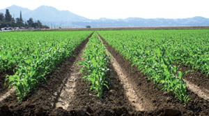 Le Plan Maroc Vert avance dans la bonne direction. Malgré les conditions climatiques difficiles…