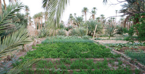 Figuig : Les «Jardins de l'oasis» primés