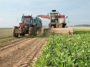 Journée arabe de l'agriculture : Le programme d'urgence de la sécurité alimentaire au coeur du débat