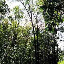 Forêts : Le danger est réel