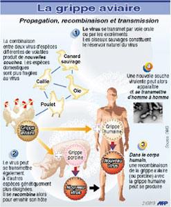 Grippe aviaire : le Maroc en danger