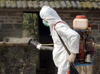 Grippe aviaire : la Thaïlande touchée