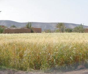 L'agriculture dans la région de Marrakech
