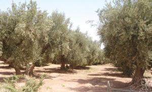 Khénifra : Le Festival de l'olivier souffle sa troisième bougie