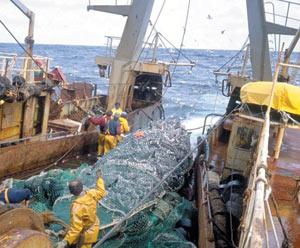 Pêche : Nouvelles mesures pour le poulpe