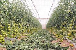 Agriculture : Fruits : la spéculation déstabilise le marché