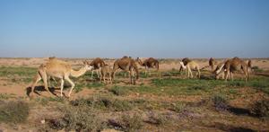 Laâyoune : 867 MDH d'investissements dans le secteur agricole à l'horizon 2020