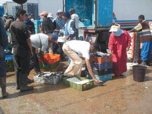 Laâyoune : Campagne de sensibilisation au profit des marins pêcheurs