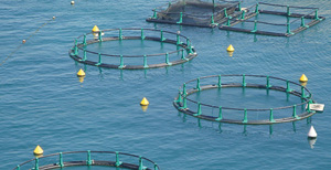Une agence nationale pour le développement de l'aquaculture