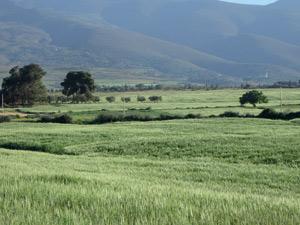 Berkane : Renforcement des techniques alternatives en irrigation
