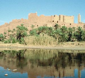 Ouarzazate : Le palmier dattier cherche valorisation