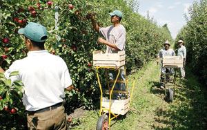 Fès-Boulemane : 157 MDH pour des projets agricoles en 2012