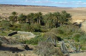 Guelmim-Smara : la réhabilitation des oasis va bon train