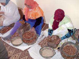 Filière de l'argan à Agadir : Un projet structurant pour les coopératives