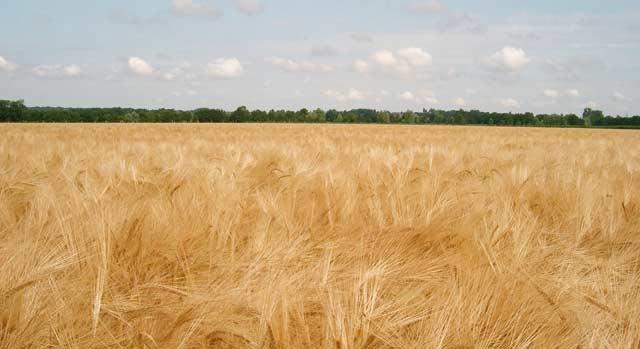 La farine coûte à l État 2,3 milliards DH par an