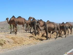 Laâyoune : Une saison agricole sous le signe de l'embellie