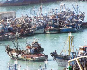 Pêche : Plan pélagique : les appels d'offres pour octobre