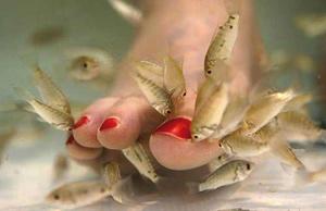 Les poissons-médecins, la cure miraculeuse