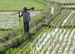 Le Maroc n'est pas à l'abri des OGM