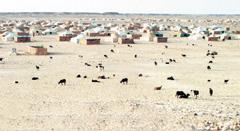 Les crimes du Polisario dénoncés à l'ONU