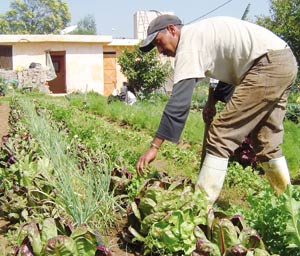 Accord agricole Maroc-Union européenne : Les opérateurs agricoles font front commun