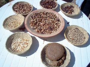 Agadir : L'huile d'argan dotée d'une appellation géographique protégée