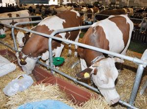 Enquête : Plus de six millions d'animaux importés en 2010
