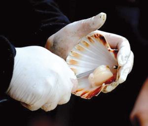 Provinces du Sud : Levée des interdictions sur les coquillages