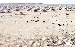 Tindouf : Alger tire sur des Sahraouis