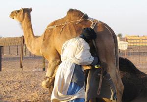 Femmes du Sahara : grossir pour plaire