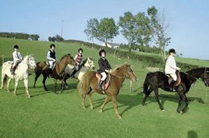 Horizons : Au Mexique, des chevaux au secours des handicapés