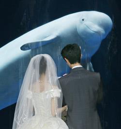 Une fausse promesse de mariage fatale
