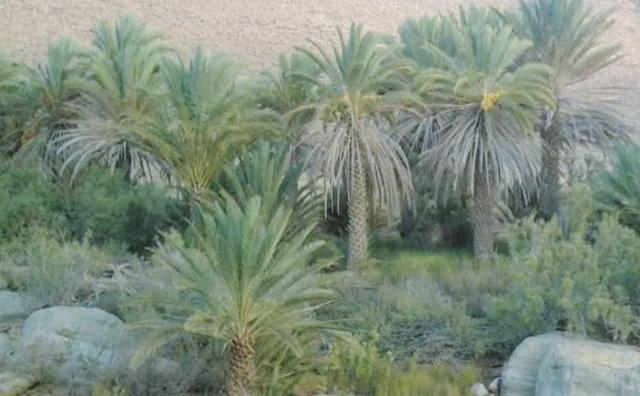 Guelmim : 65,5 millions DH pour  le développement des oasis