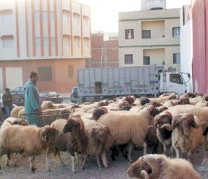 Tanger : Aïd Al Adha : Floraison de plusieurs commerces