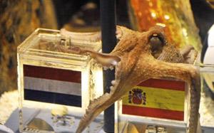 Star planétaire, Paul le poulpe reçoit sa Coupe du monde