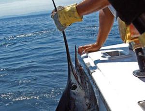 Hausse de 21% de la production de poisson