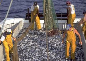 Pêche côtière : Les opérateurs s'organisent en confédération
