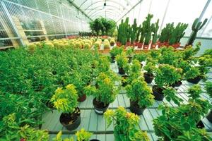 Pépinière : Arborescence s'implante dans la région de Casablanca