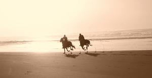 Balade à cheval : Un instant d'évasion au coeur du stress