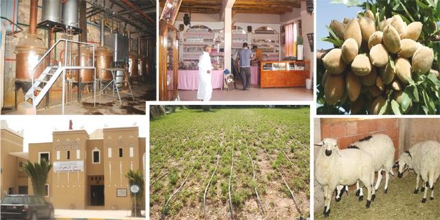 Plan Maroc Vert : Ouarzazate et régions voient Vert !