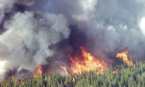 Incendies de forêt : légère baisse de la superficie moyenne incendiée