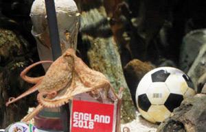 Mondial-2018 : Paul le poulpe devient ambassadeur d'Angleterre