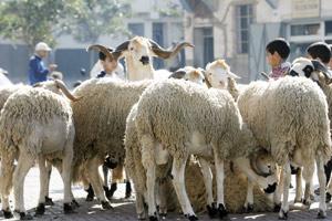 L'offre en ovins et caprins atteint 6,9 millions de têtes