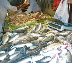 Production halieutique : Les captures en baisse de 32% à fin juillet 2011