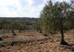 Industrie : L'huile d'olive, un marché en expansion