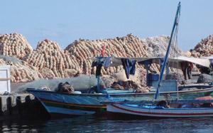 Pêche au poulpe, une valeur sûre pour l'économie des provinces du Sud