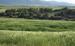 Nador : démarrage de la campagne agricole 2010-2011