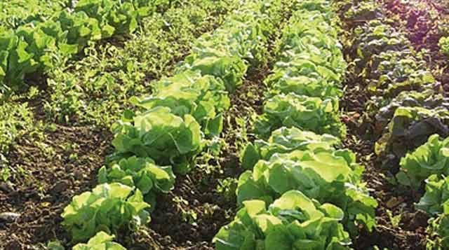 Trophées de  la filière fruits  et légumes : Le Maroc fête ses agriculteurs