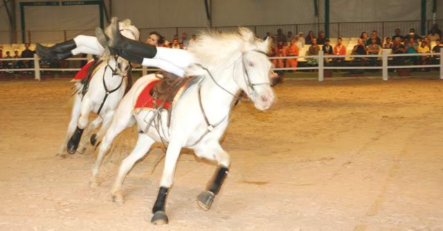 La filière équine honorablement célébrée à El jadida